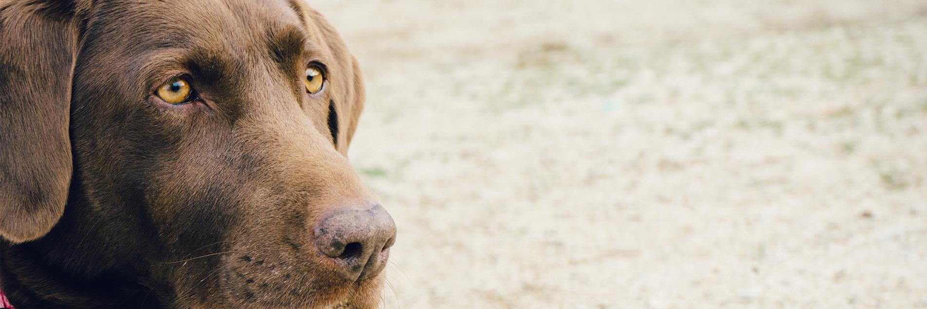 servicii veterinare Balotesti